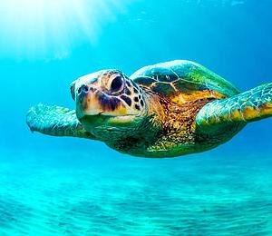 Bahamas Dive Center