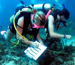 Bahamas Scuba Certification