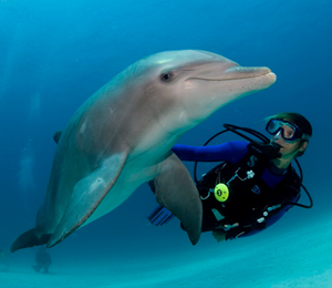 Freeport Bahamas Scuba Diving
