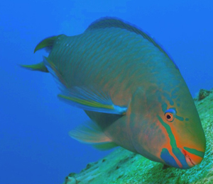 Bahamas Reef Fish Species
