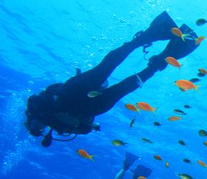Resort Course Dives in Nassau