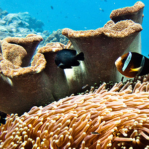 More Info on Scuba Diving in Nassau