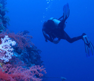 More Info on Scuba Diving Freeport, Bahamas