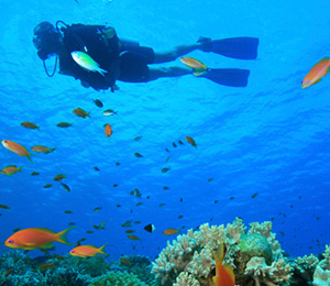 Special Dives in Freeport Bahamas
