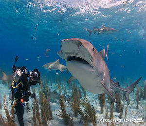 Bahamas Underwater Photo Week
